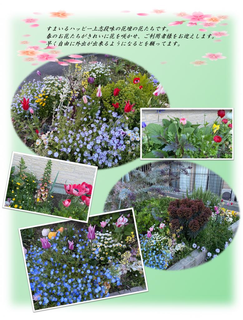すまいる:春の花壇
