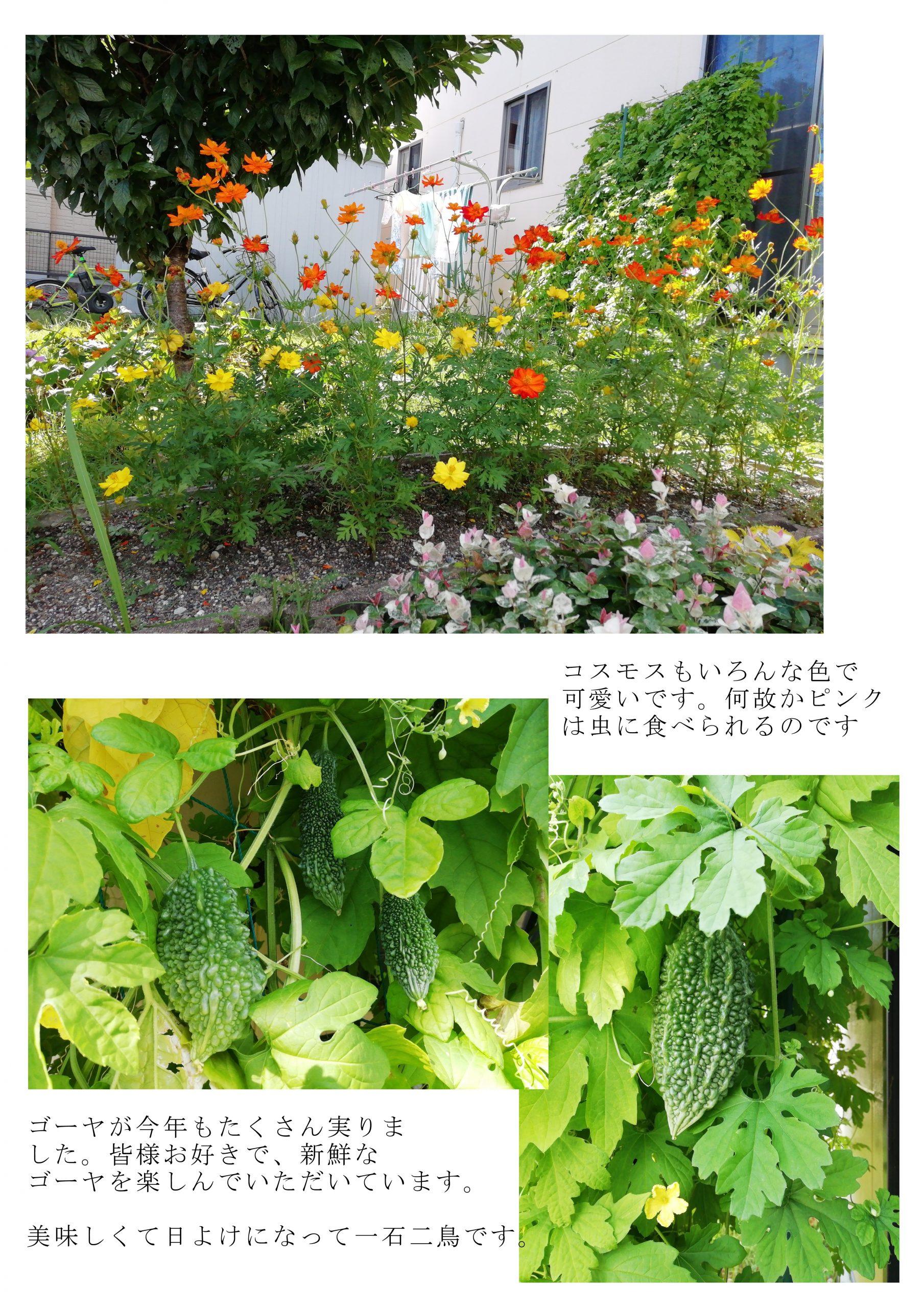 夏の日進の花壇